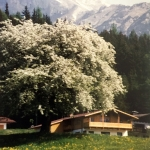 Holiday at house Astrid-surrounded by meadows, forests and mountains in Ramsau am Dachstein